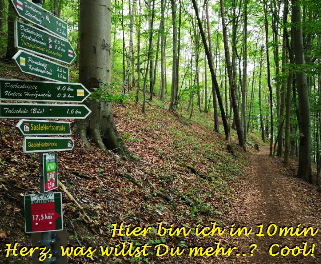180801 Hoch auf dt. Wälder2 miHo