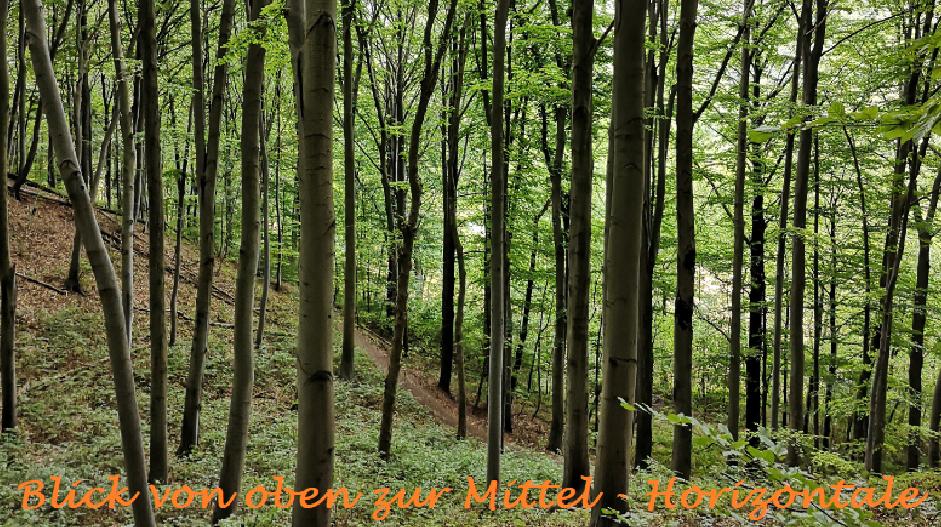 180801 Hoch auf dt. Wälder5 Blick zu miHo