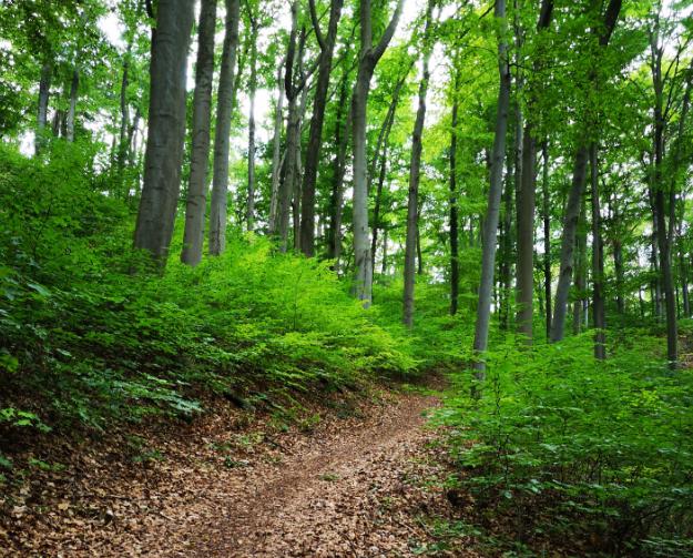 180801 Hoch auf dt. Wälder6 obHo