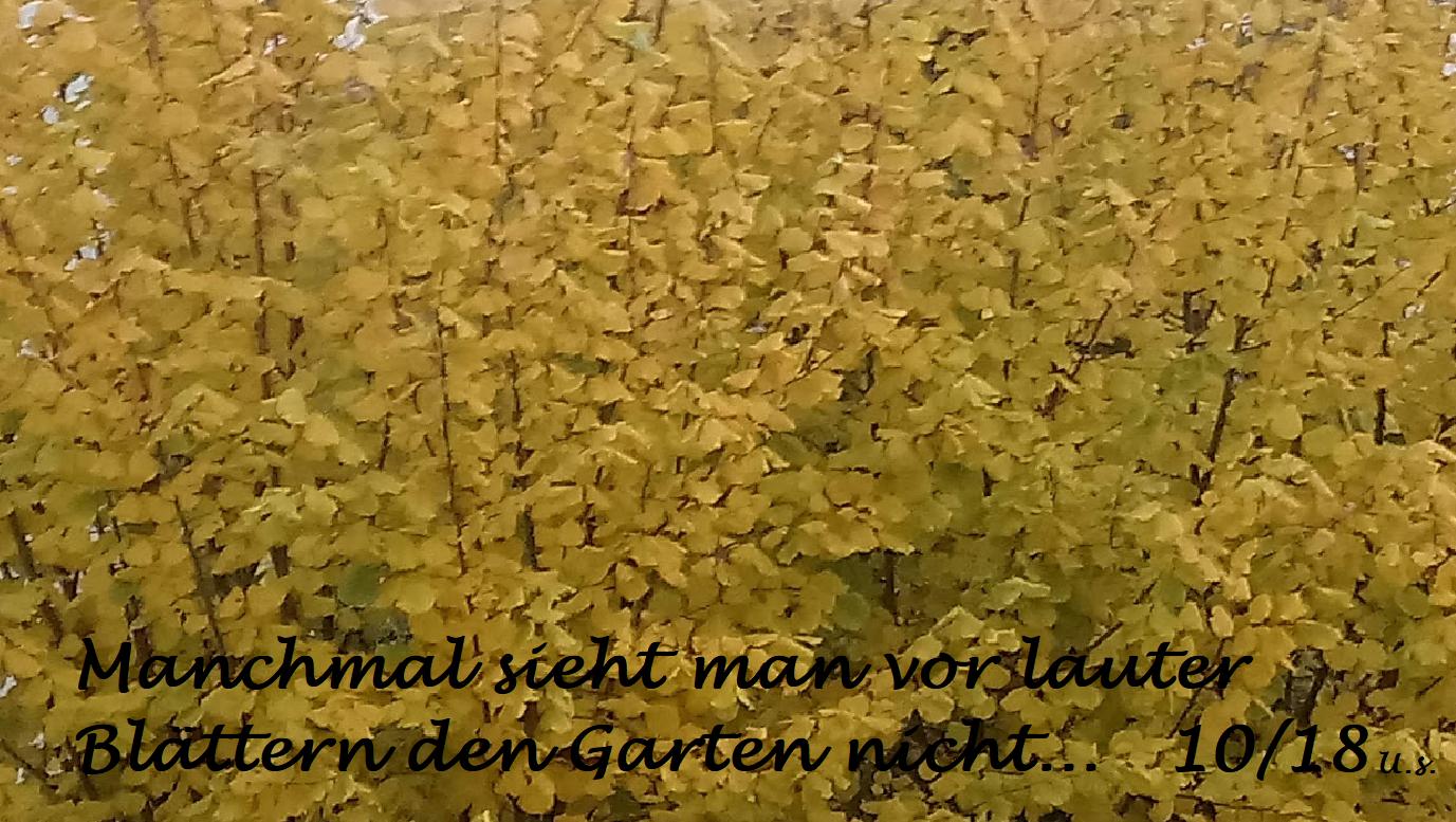 1811 Garten, Nußbäume